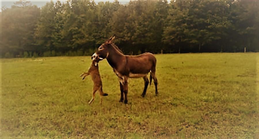 best of Ass equine Jack