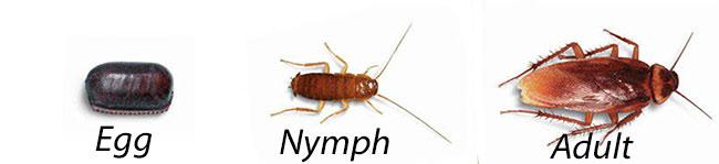Lightening B. reccomend Flying cock roach