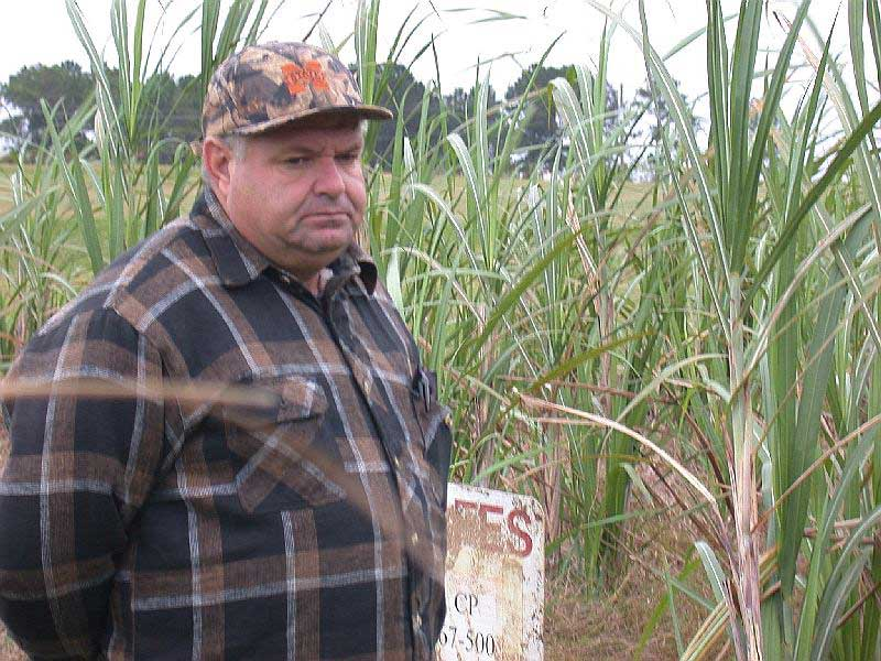 The M. reccomend Dale cane seed matures days